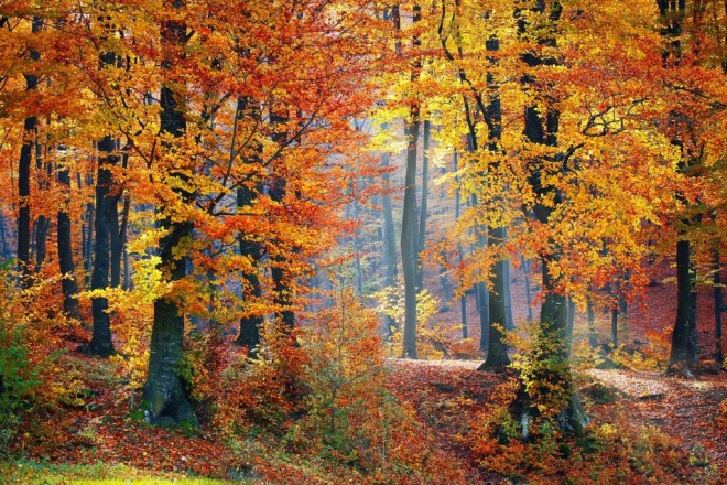 The woods in autumn