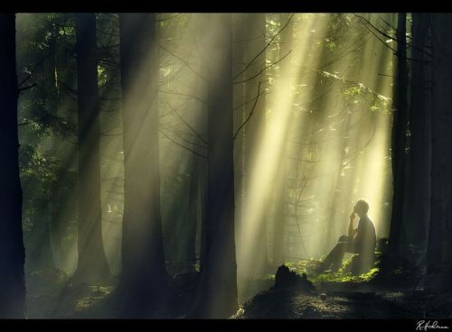 forest-grove-and-rays