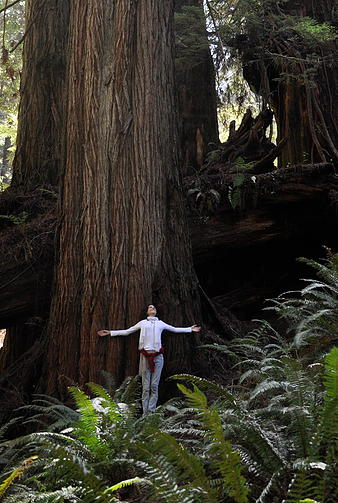 Sophie with a Redwood