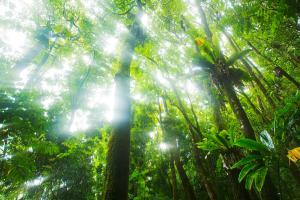 sun-rays-through-rainforest-trees-quincy-dein