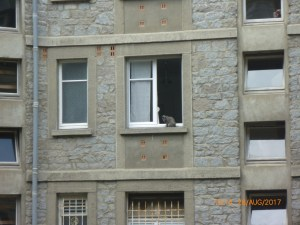 cat-on-a-window-ledge_36059315634_o