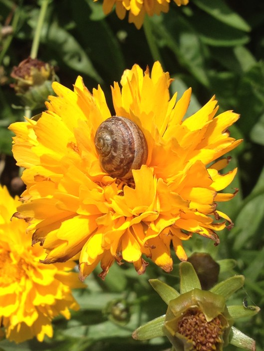 snail-in-a-flower-by-saint-vincent_36440890474_o