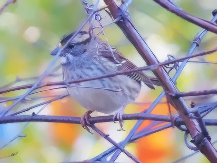 Topaz Clean 3 cartoon Sparrow on branch