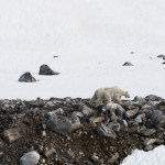 Philip Kanwischer fine art illusion uncanny photography surreal art work arctic Svalbard polar swim residency