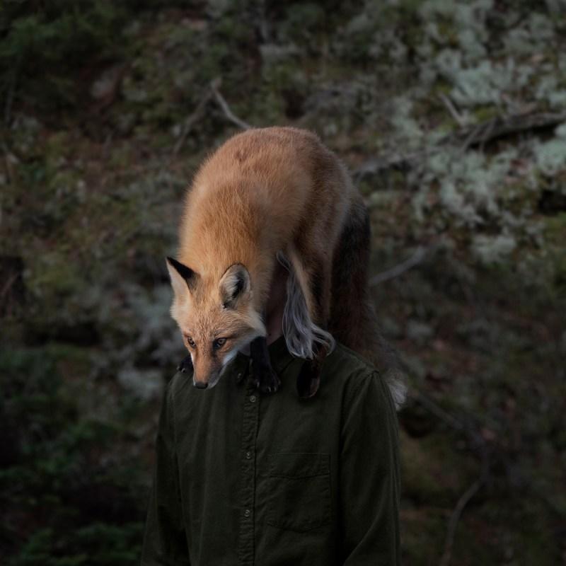 fine art philip kanwischer photography elk wild reserved photoshop photo manipulation fox inhospitably ours wildlife animal portraiture