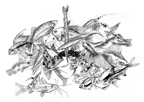 shoal,pen and ink 2009