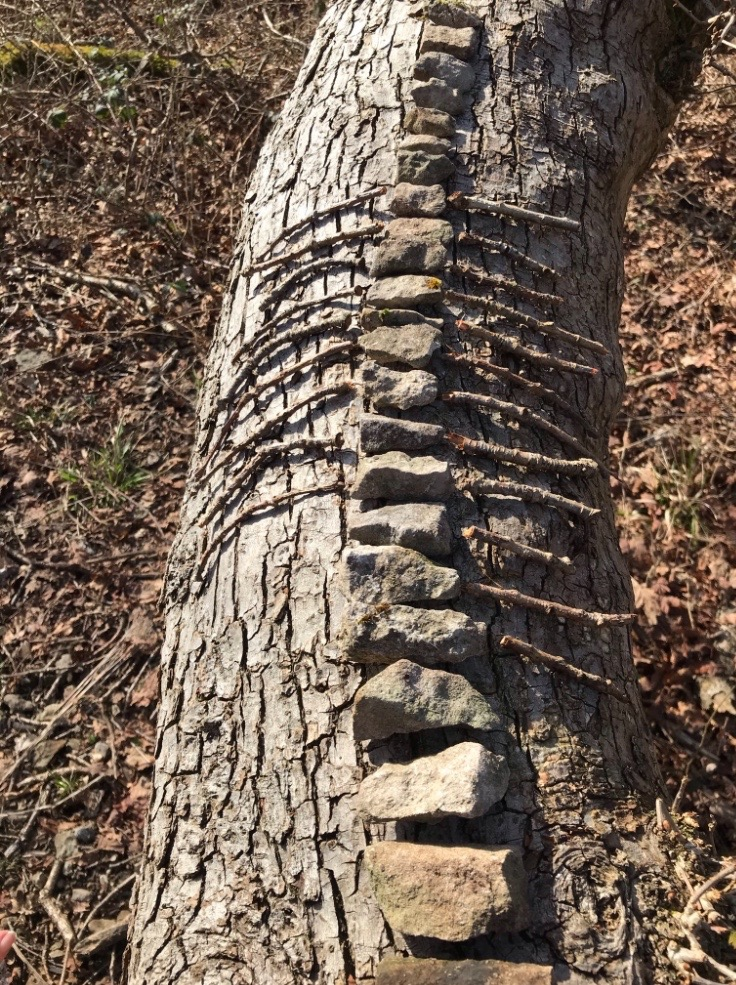 Spine and trunk