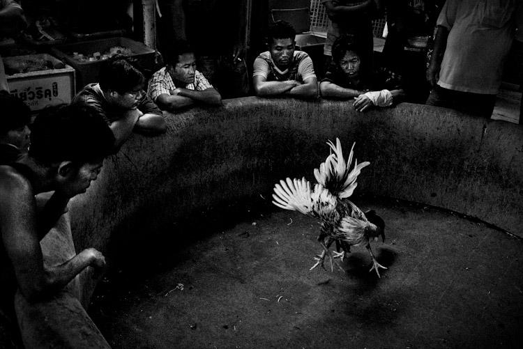 Combat de coqs à Bangkok (version noir & blanc)