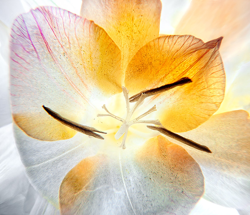 Inflorescence-fleurs-8