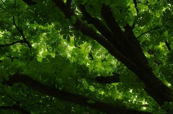 Des feuilles comme s'il en pleuvait