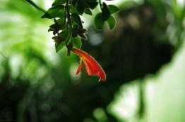 Les lèvres de la jungle