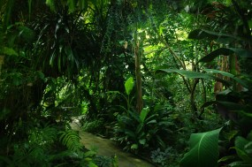 Jungle virtuelle