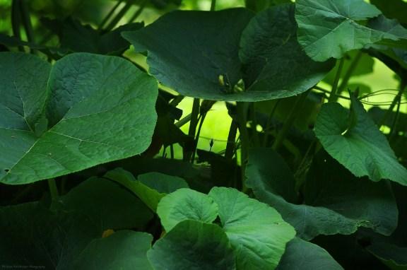 Les bols de verdure