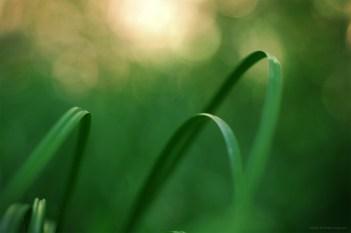 Les arches des rêves (magie du Carex n°6)