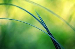 Tous les chemins (magie du Carex n°21)