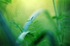 Jungles liliputiennes (magie du Carex n°27)