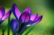 Flor Borealis