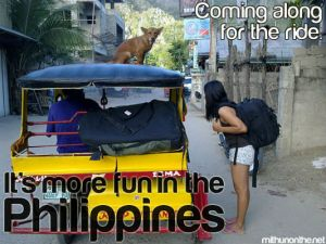 dog-on-roof-itsmorefuninthephilippines-5901