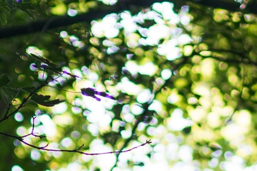 sigma 35mm 1.4 art hsm dg sharpness resolution contrast high 42mp a7rii a7riii bokeh za sony loca longitudinal ca purple fringing