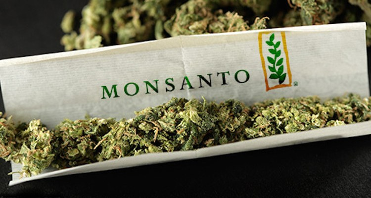 Cannabis joint with Monsanto logo