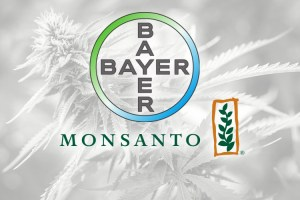 Bayer and Monsanto logos in front of cannabis