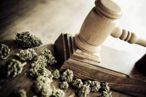 Judges hammer and cannabis bud