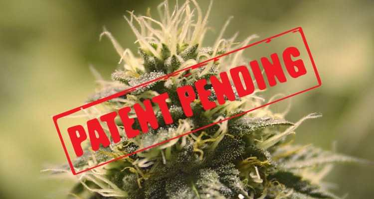 Patent pending odorless cannabis