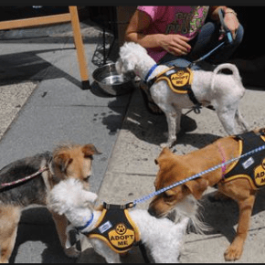 Square 1682 Relaunches Bring Your Own Dog Brunch This Saturday