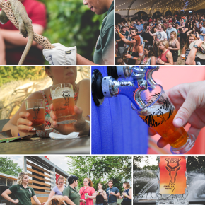 Philadelphia Zoo's Annual Summer Ale Festival