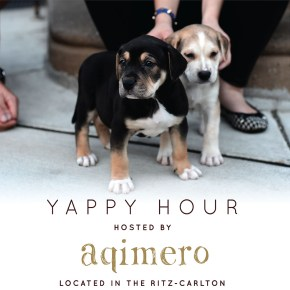 Cocktails for a Cause: Aqimero Welcomes Hemlock Edge Animal Rescue for a Yappy Hour Event