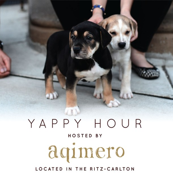 Aqimero Yappy Hour
