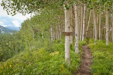 Deer Creak Trail - 12-962