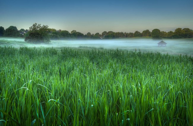 green grassy field in morning fog