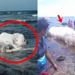 This Mysterious White And Hairy Sea Creature Frightens Netizens On Social Media