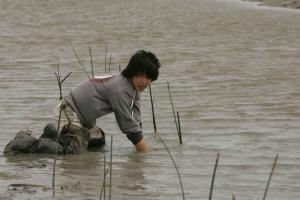 the swampman Davison