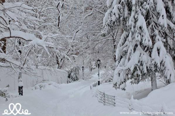 central-park-snow-jan-3