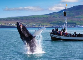 humpback_jumping
