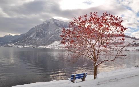 tree_bench_leaves_autumn_october_freezing_mountain_lake_48061_3840x2400