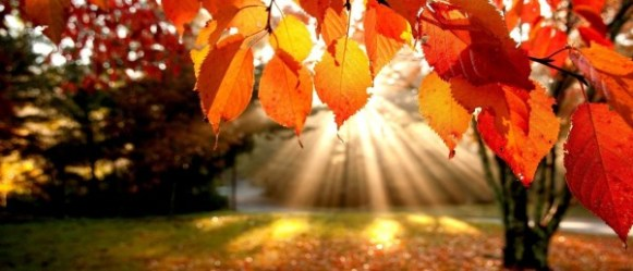 Fall-Nature-HD-Wallpaper-2-601x258