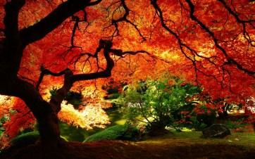 ws_Maple_in_Autumn_1920x1200