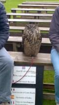 Tanti spettacoli di falconeria al Dunrobin Castle