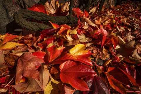 tile-the-autumn-coziness-of-st-clara-church11