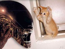 alien_vs_cat