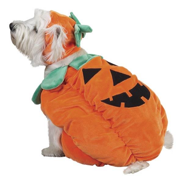 Big Dog Pumpkin Halloween Costume