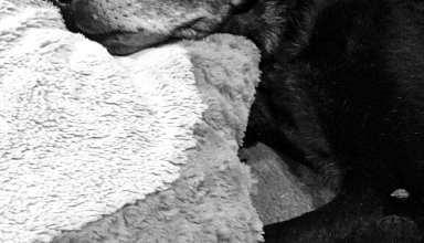 Philosophy of Dog Senior Pets