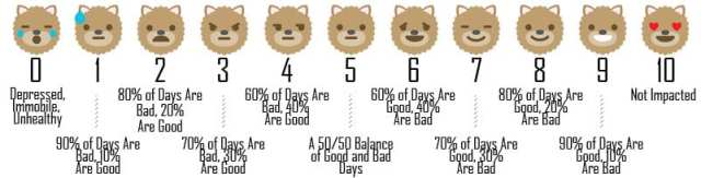 Measuring Your Dog's Good Days Vs. Bad on the Quality of Life Scale