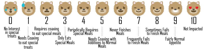 Measuring Your Dog's Appetite on the Quality of Life Scale