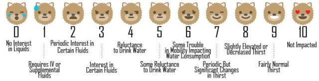 Measuring Your Dog's Thirst on the Quality of Life Scale