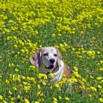 6 Alternative Treatment Options For Senior Dogs