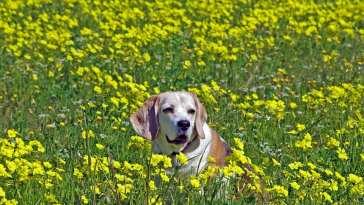 6 Alternative Treatment Options For Senior Dogs